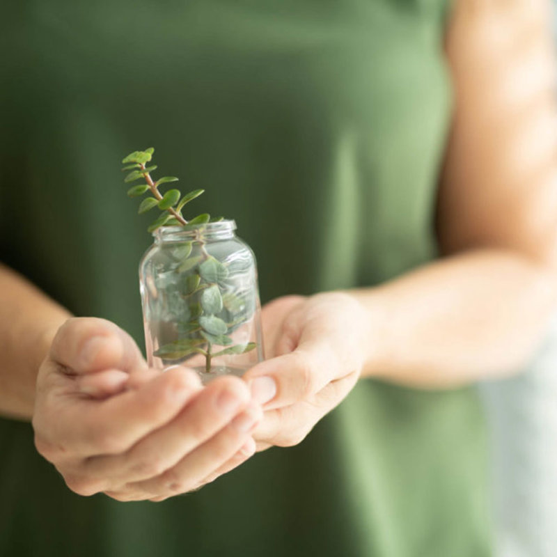 Employee holding plant in jar